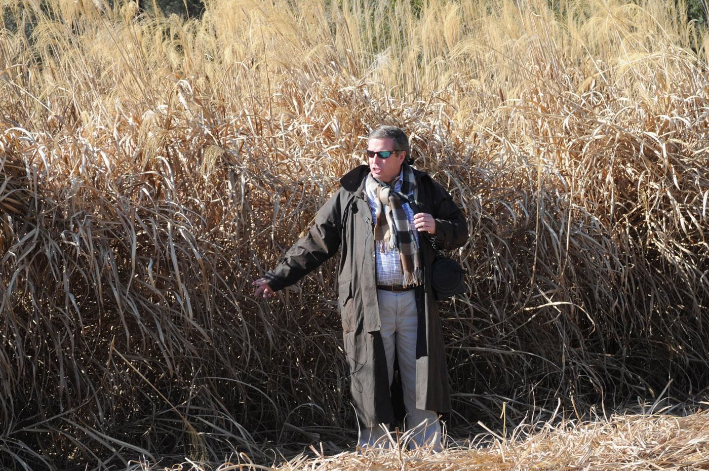 Freedom Giant Miscanthus was developed at Mississippi State University and is licensed exclusively to Repreve Renewables, a joint venture between sod entrepreneur Phillip Jennings (pictured) and publicly traded textile company UNIFI Manufacturing, Inc. (Photo by Kat Lawrence)