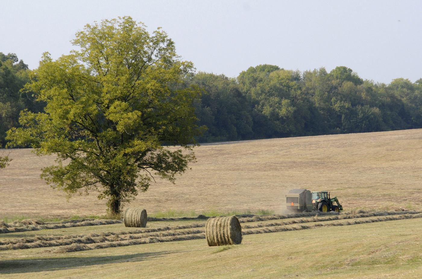 Hay production is a key component of a successful livestock producer's management plan. Forage management practices, including weed control and fertilizer use, will be part of the spring grazing school offered by MSU Extension Service. (Photo by Scott Corey)