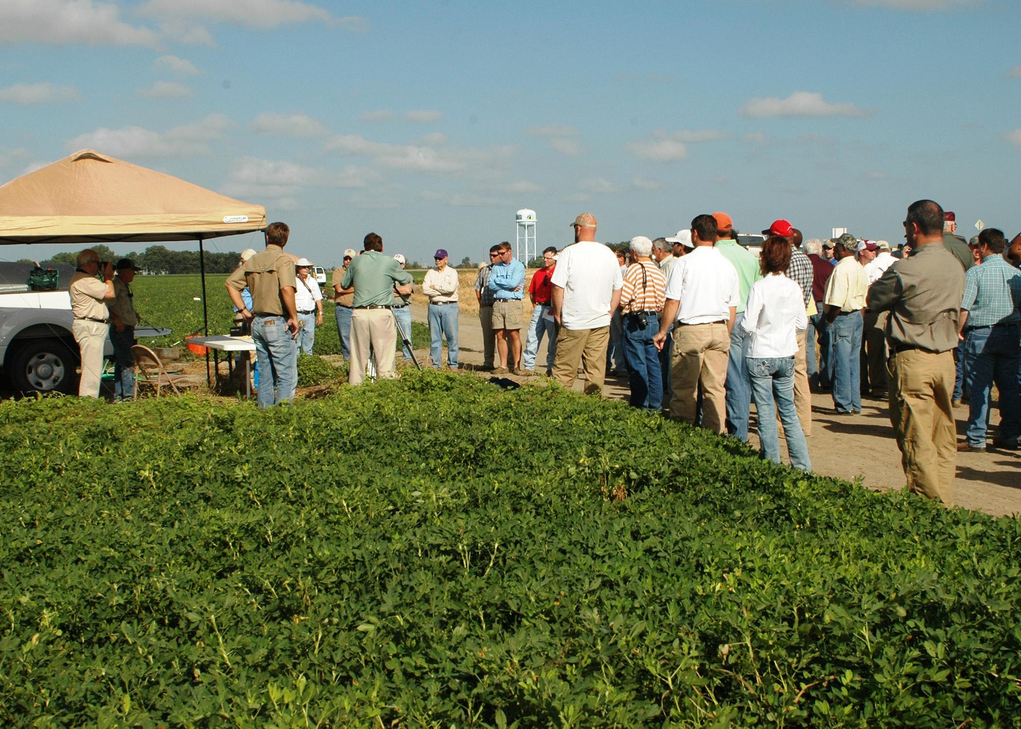 Peanut producers from northwest Mississippi learn about successful production techniques at the Aug. 30 peanut field day near Clarksdale. (Photograph by DREC Communications/Rebekah Ray)