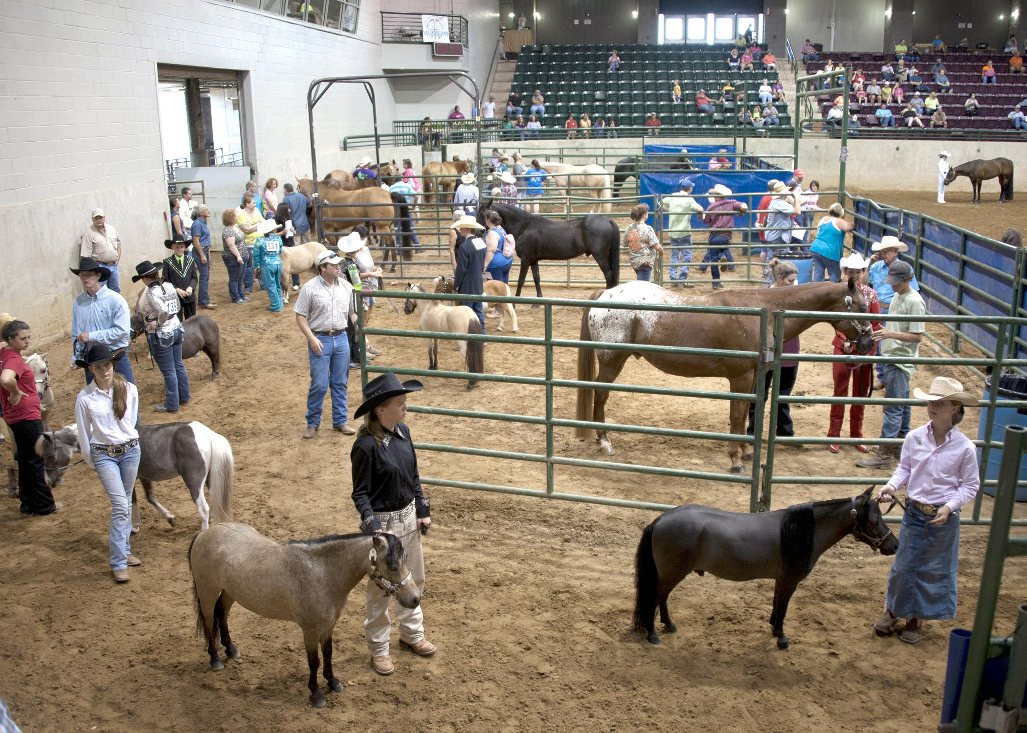 Mississippi junior and senior 4-H'ers prepare to enter the ring for the selection of grand and reserve grand champion pony mares, registered American quarter horse mares, grade western mares, and registered paint mares on June 28 during the 2013 4-H Horse Championship at the Mississippi State Fairgrounds in Jackson. (Photo by MSU Ag Communications/Kat Lawrence)