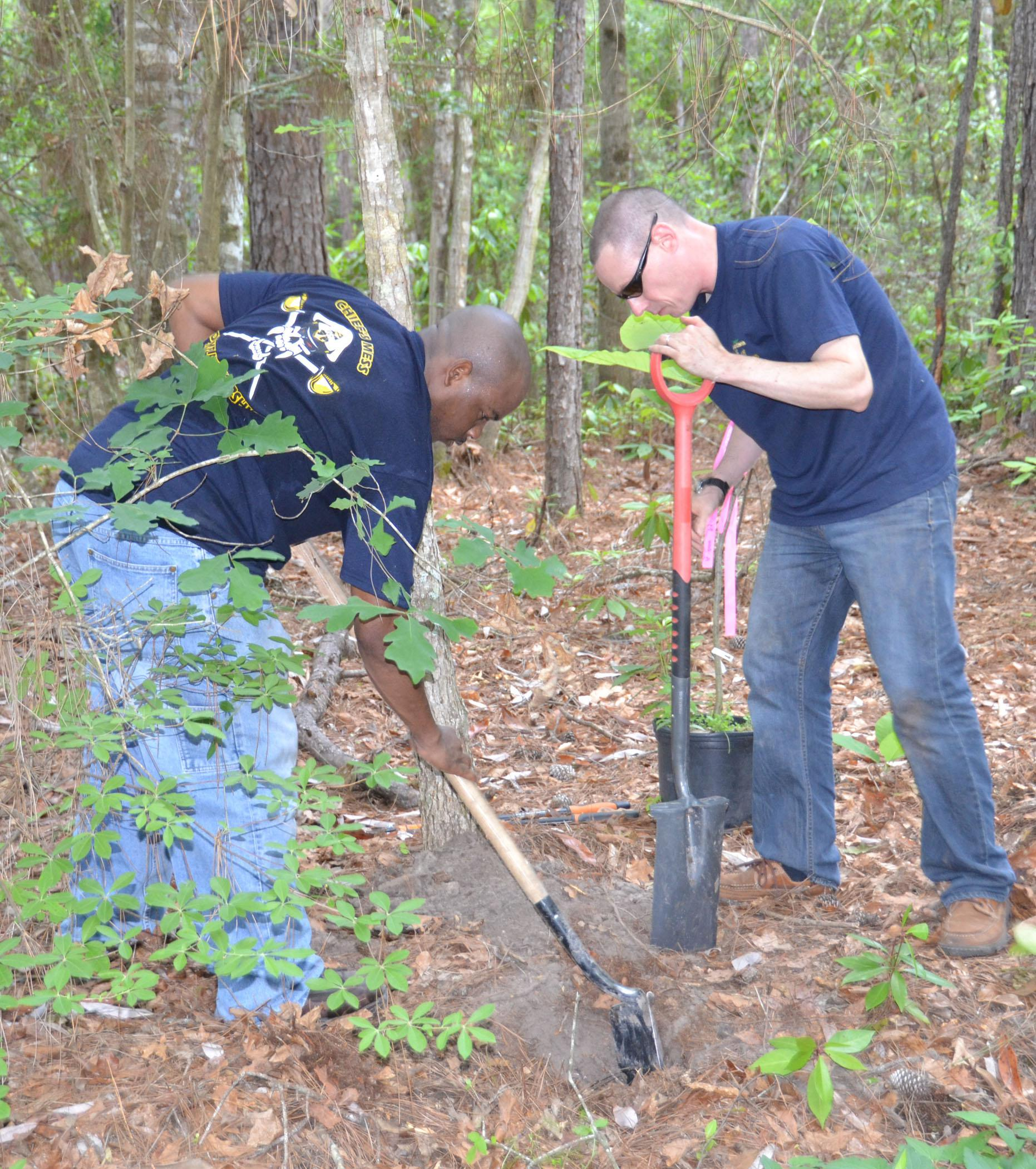 Navy Chief Contrail Allen, left, and Navy Chief Ryan Done plant a Bigleaf Magnolia on the Arrival Journey Exhibit at the Crosby Arboretum on May 8. About 20 Navy volunteers from the Stennis Space Center helped repaint the entrance gates, prune vegetation along the trails and construct part of the new Swamp Forest Education Exhibit. (Photos by Susan Collins-Smith)