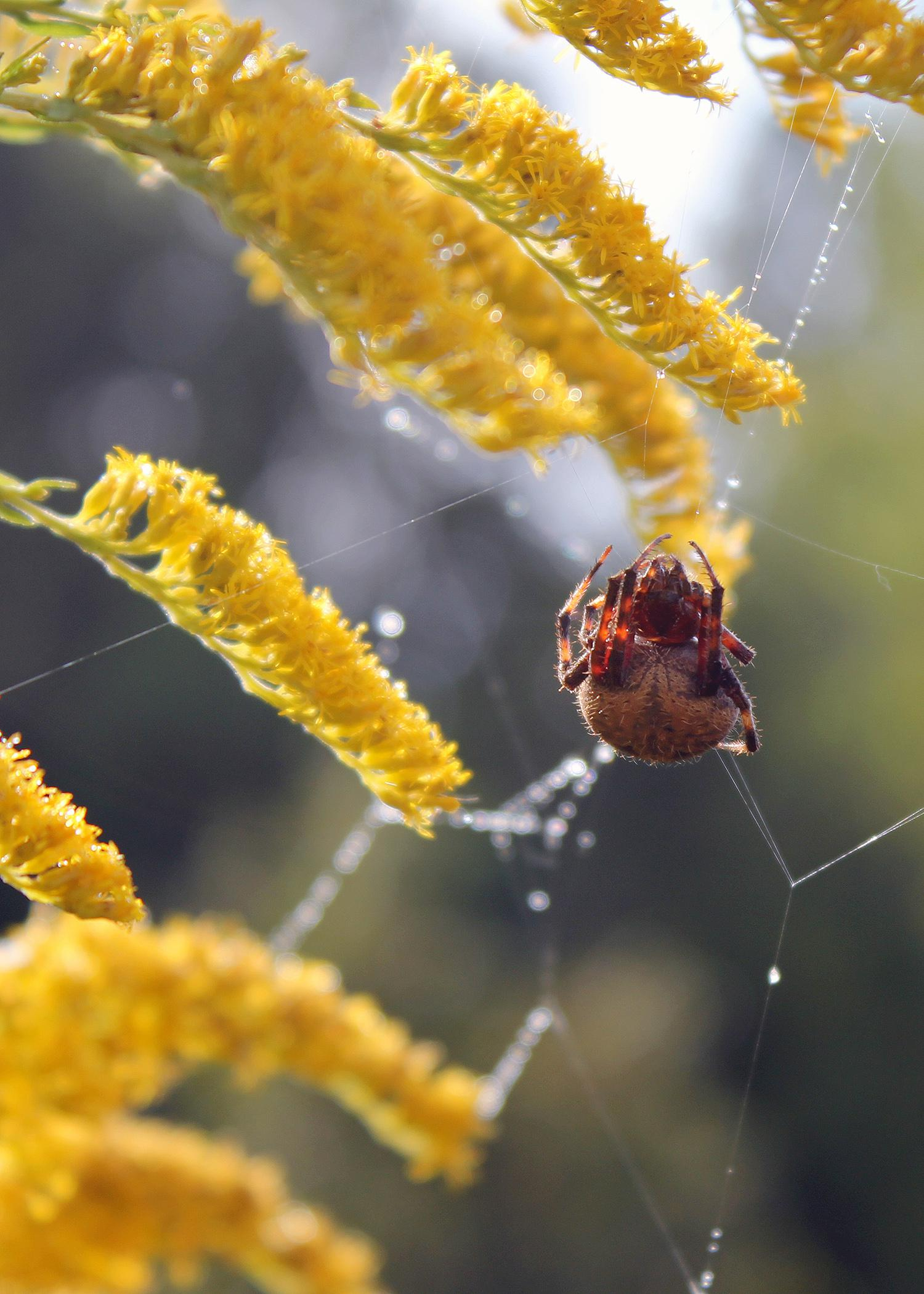Whether kids calculate the angles on a spider web or draw in a nature notebook, opportunities to study nature and enjoy the great outdoors this summer abound. (Photo courtesy of Marina Denny)