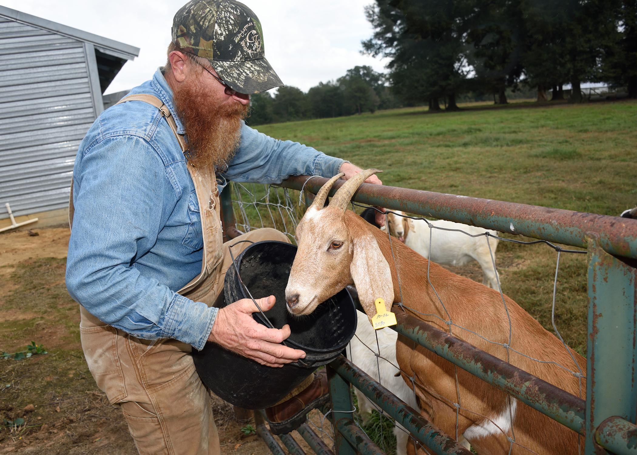 Dewayne Smith checks one of his goats at his Greene County, Mississippi, farm Oct. 13, 2014. Smith is one of several Mississippi farmers diversifying their farming businesses by adding meat goats. (Photo by MSU Ag Communications/Kevin Hudson)