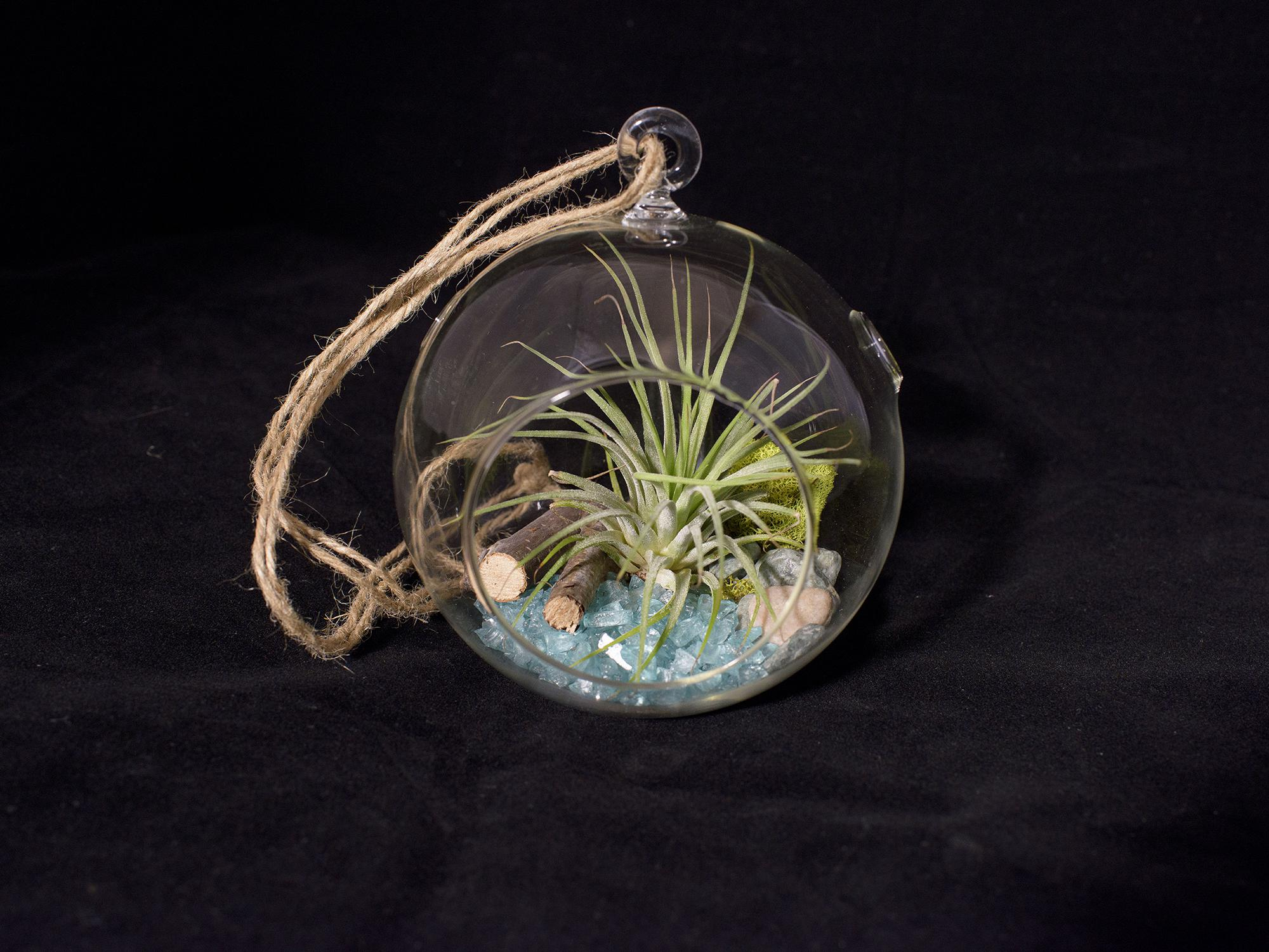 An air plant terrarium is a hollow, vented glass container with decorative sand and pebbles, twigs or driftwood, moss, and a dusty green tillandsia plant, also called an air plant.