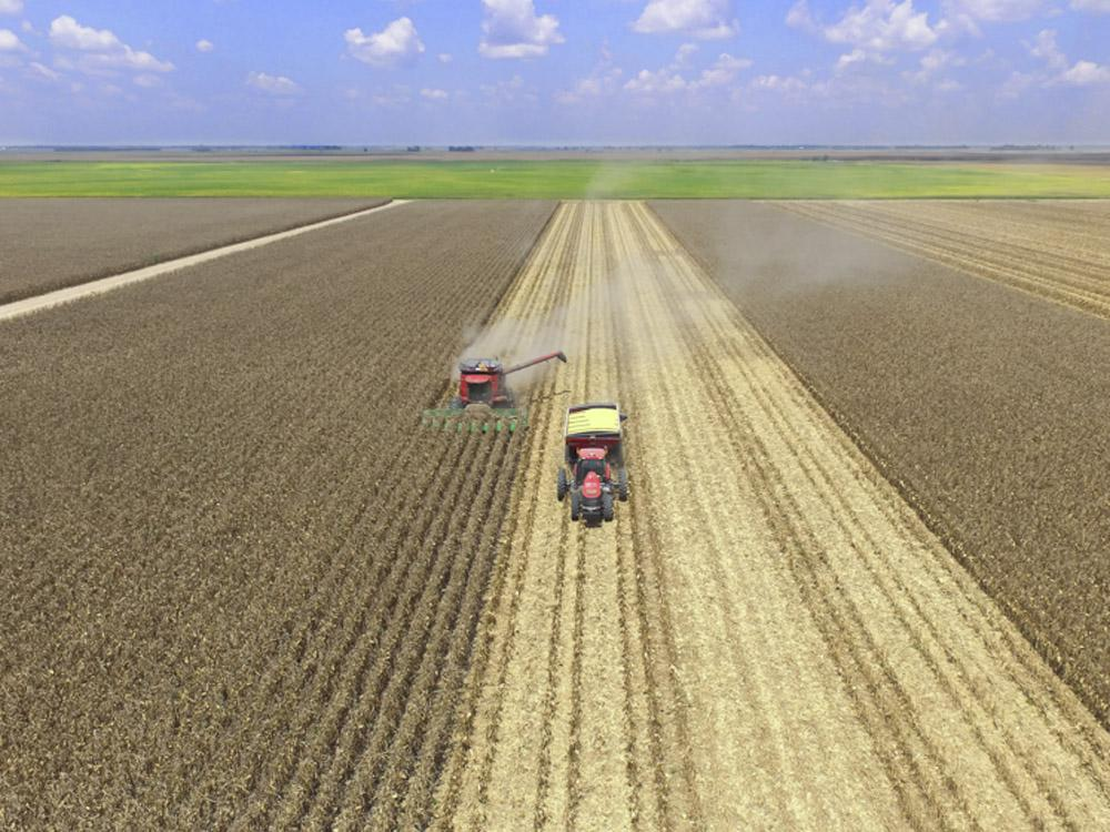 A combine and tractor in the center of a corn field