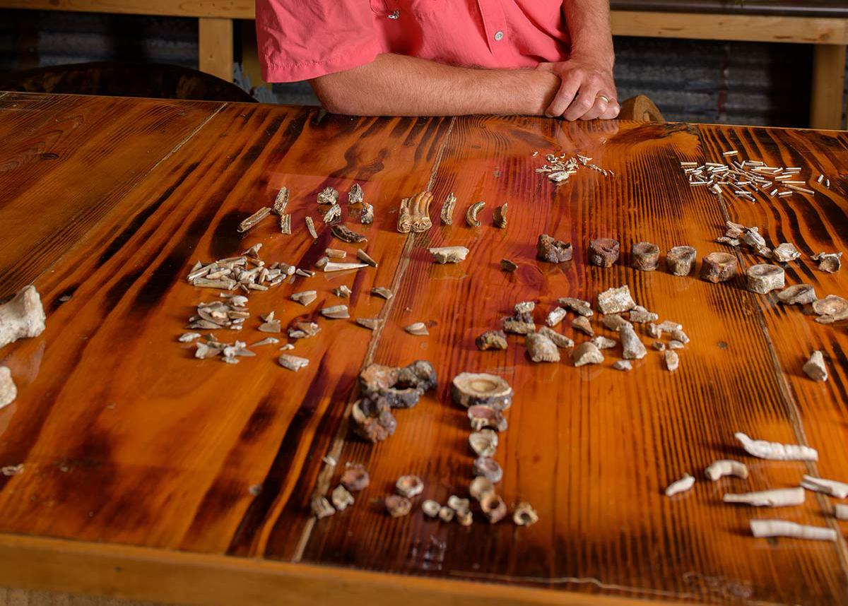 A man with glasses standing behind a table with shells, teeth, and bones on it.