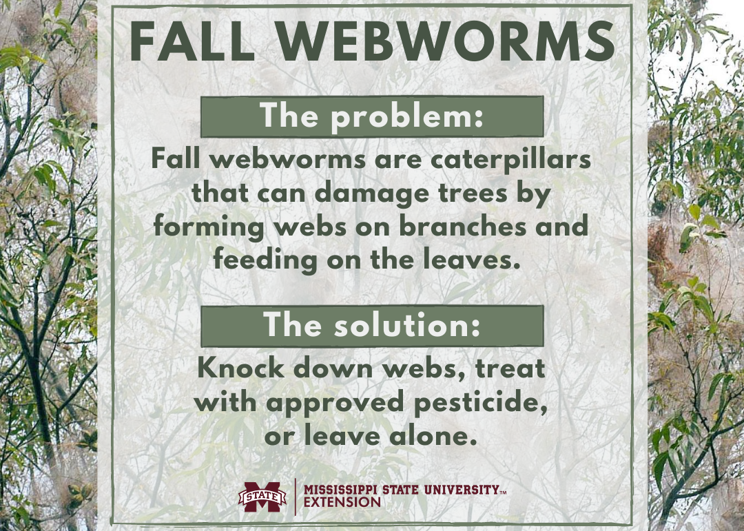 Descriptive graphic explaining what webworms are and how to treat them.