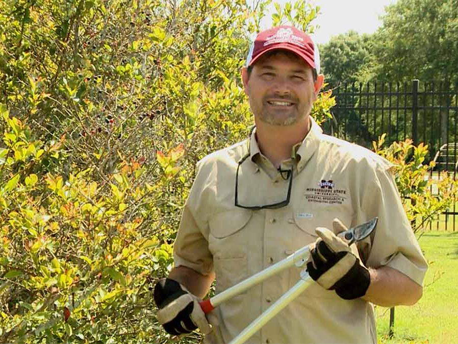 A man holds pruning loppers as he stands next to a tall blueberry bush.