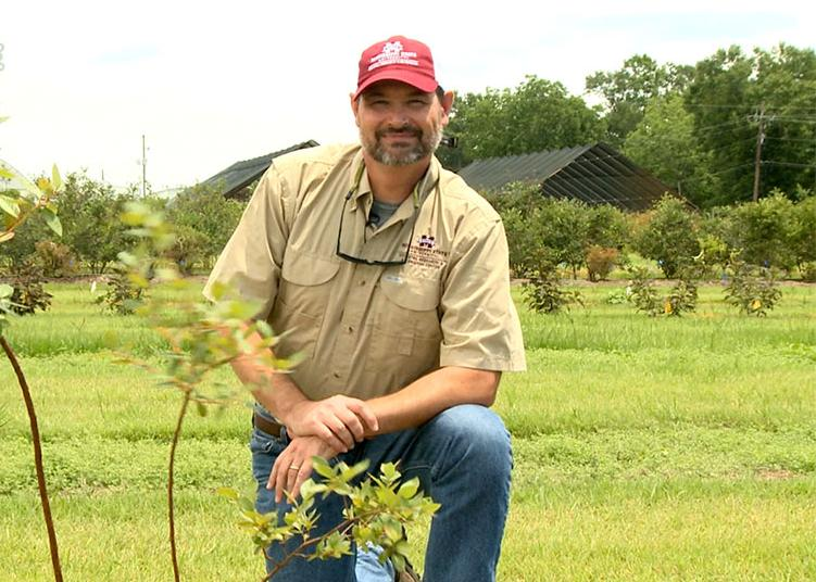 Eric Stafne kneels beside a newly planted blueberry bush.