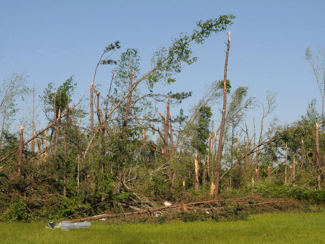 Timber took a beating from several tornadoes that went across the state April 27. This timber along Highway 403 in Mathiston was in an area among the hardest hit that day. (Photo by Kat Lawrence)