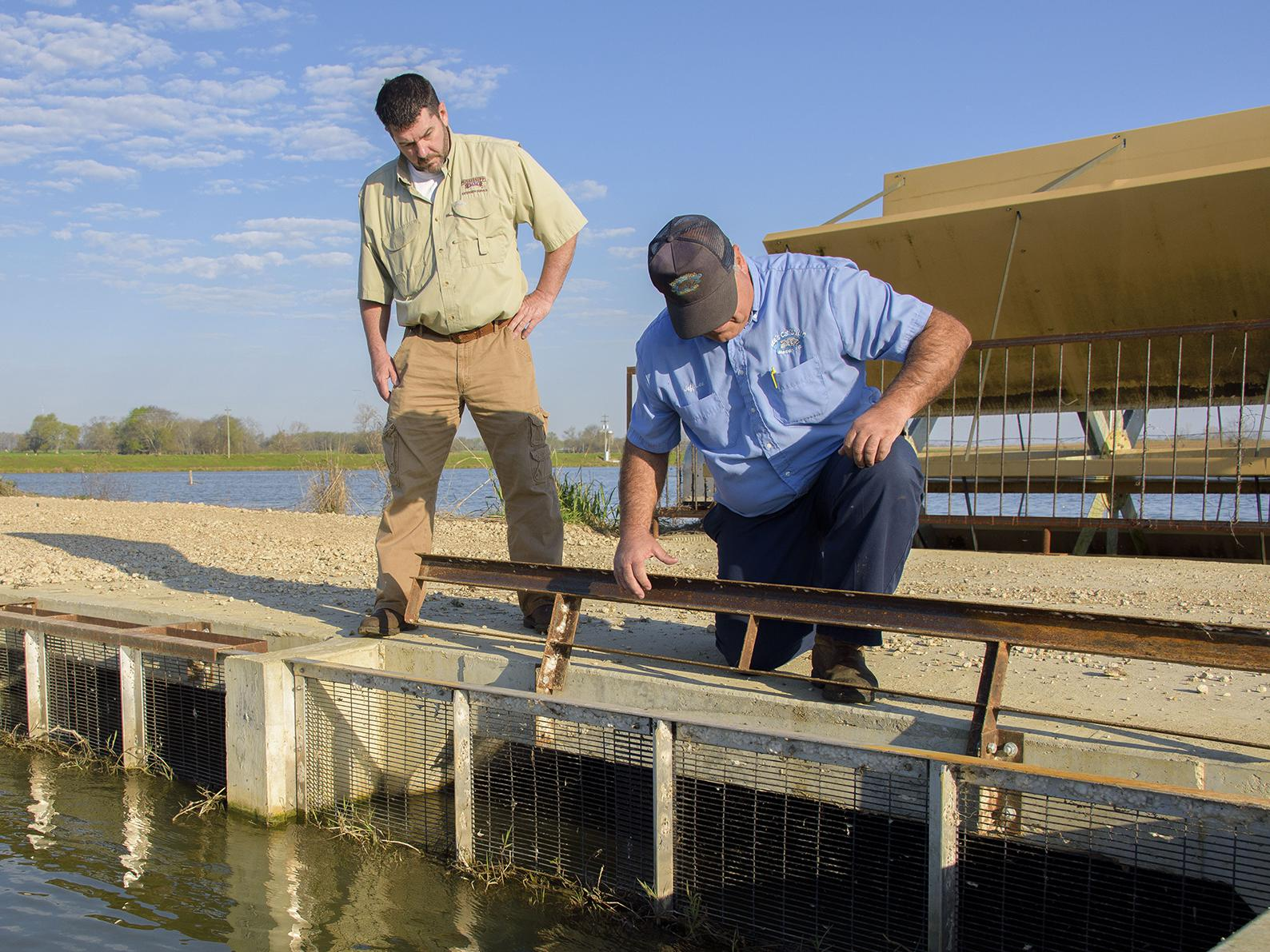 Split-cell catfish ponds circulate oxygen-rich water from the larger lagoon through channels to the smaller side where catfish grow. On March 21, 2017, Mississippi State University Extension aquaculture specialist Mark Peterman, left, and Jeff Lee of Lee's Catfish in Macon examined the fencing that contains fish in this Noxubee County catfish pond. (Photo by MSU Extension Service/Kevin Hudson)