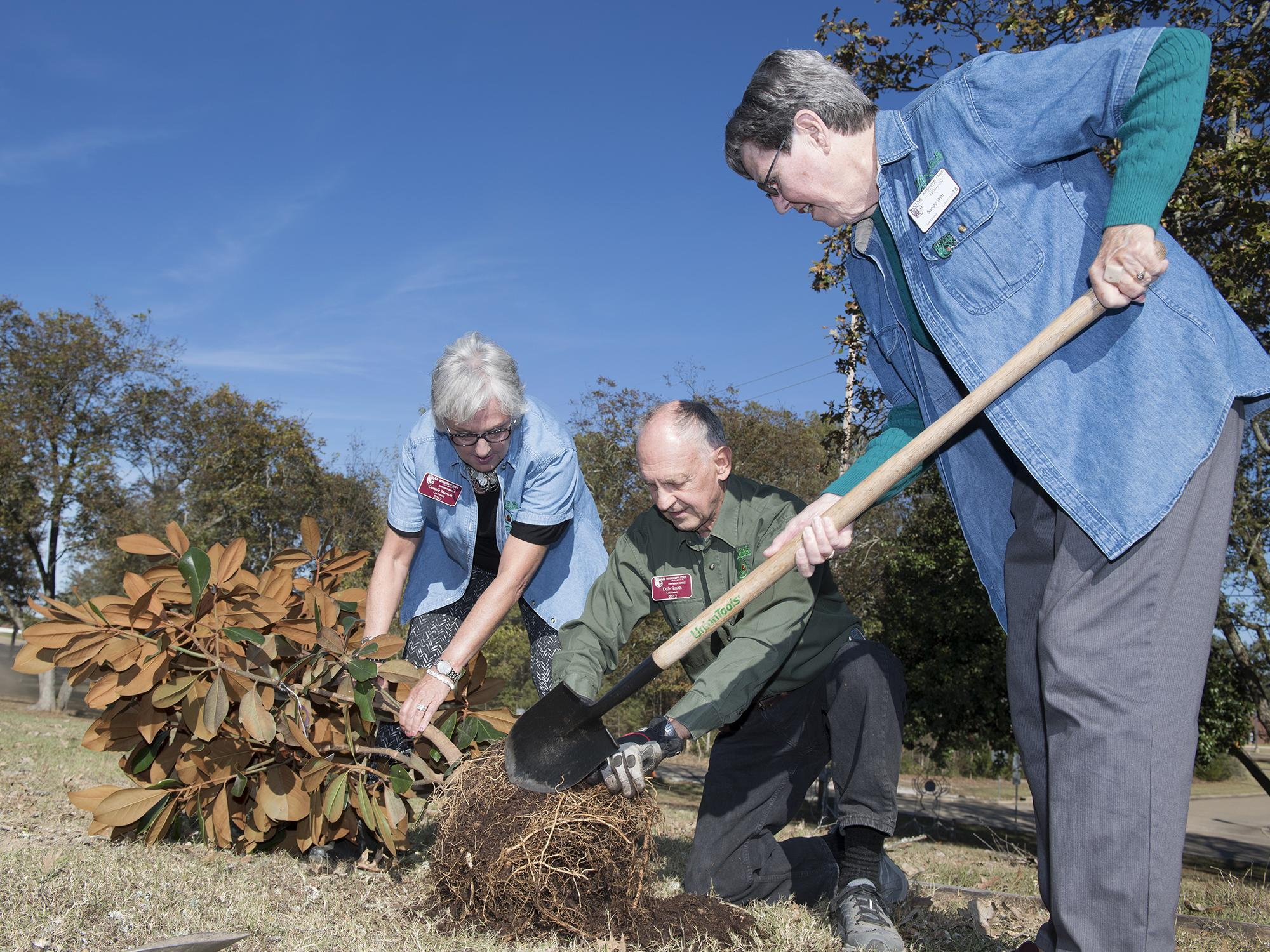 One woman uses a shovel to break open a rootball on a small, unplanted tree while another woman and a man assist.