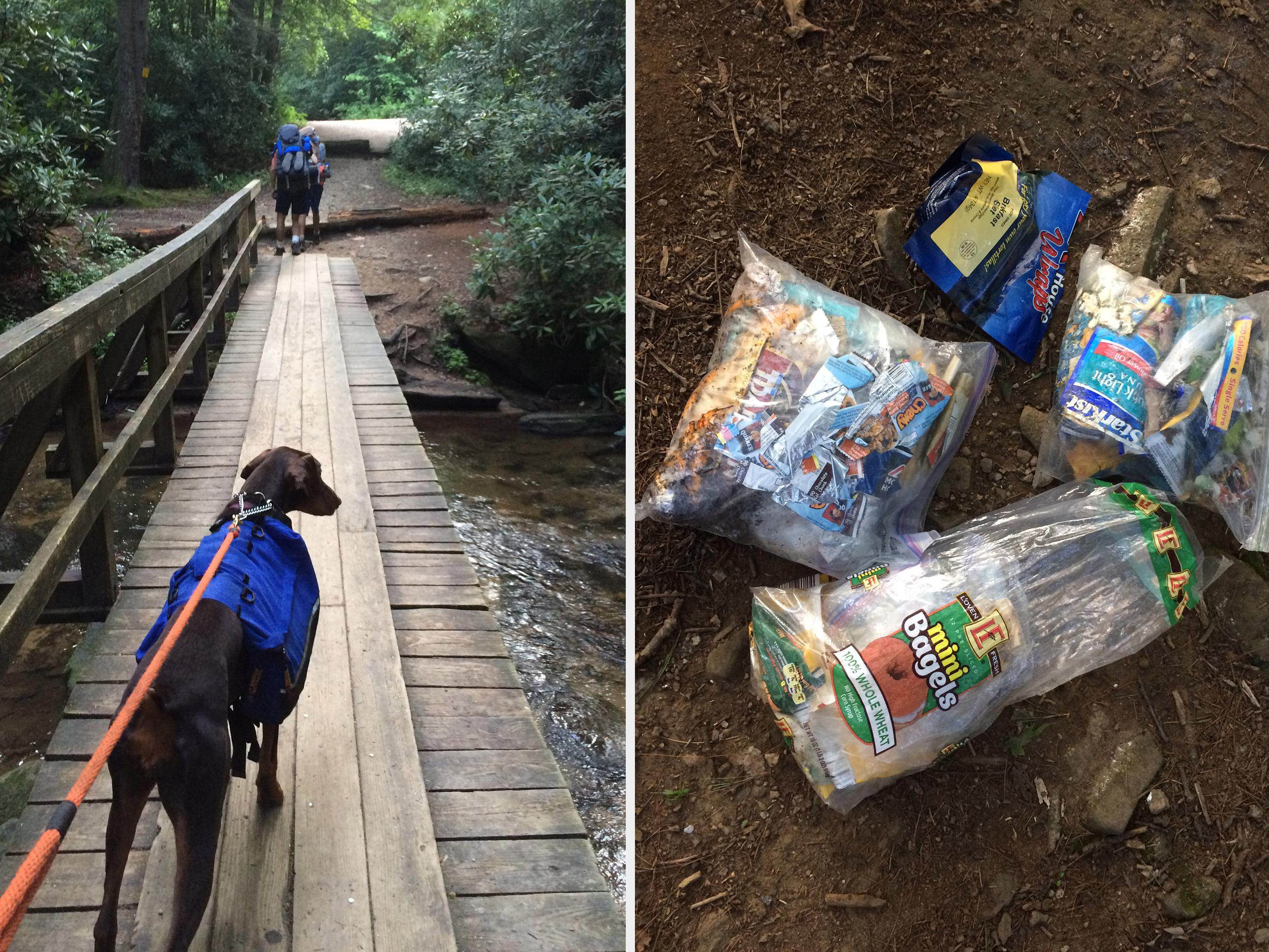 Keep dogs on leashes while on nature trails to keep them from chasing or harassing the wildlife. Bring all trash and leftover food with you when your outdoor adventure concludes. (Photos by MSU Extension Service/Evan O'Donnell)
