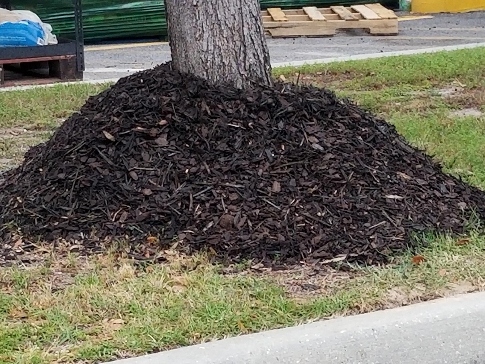 Don't mulch trees like this. Mulching offers significant benefits, but a layer should only be 2 to 3 inches deep and pulled away from the tree trunk. (Photo by MSU Extension/Gary Bachman)