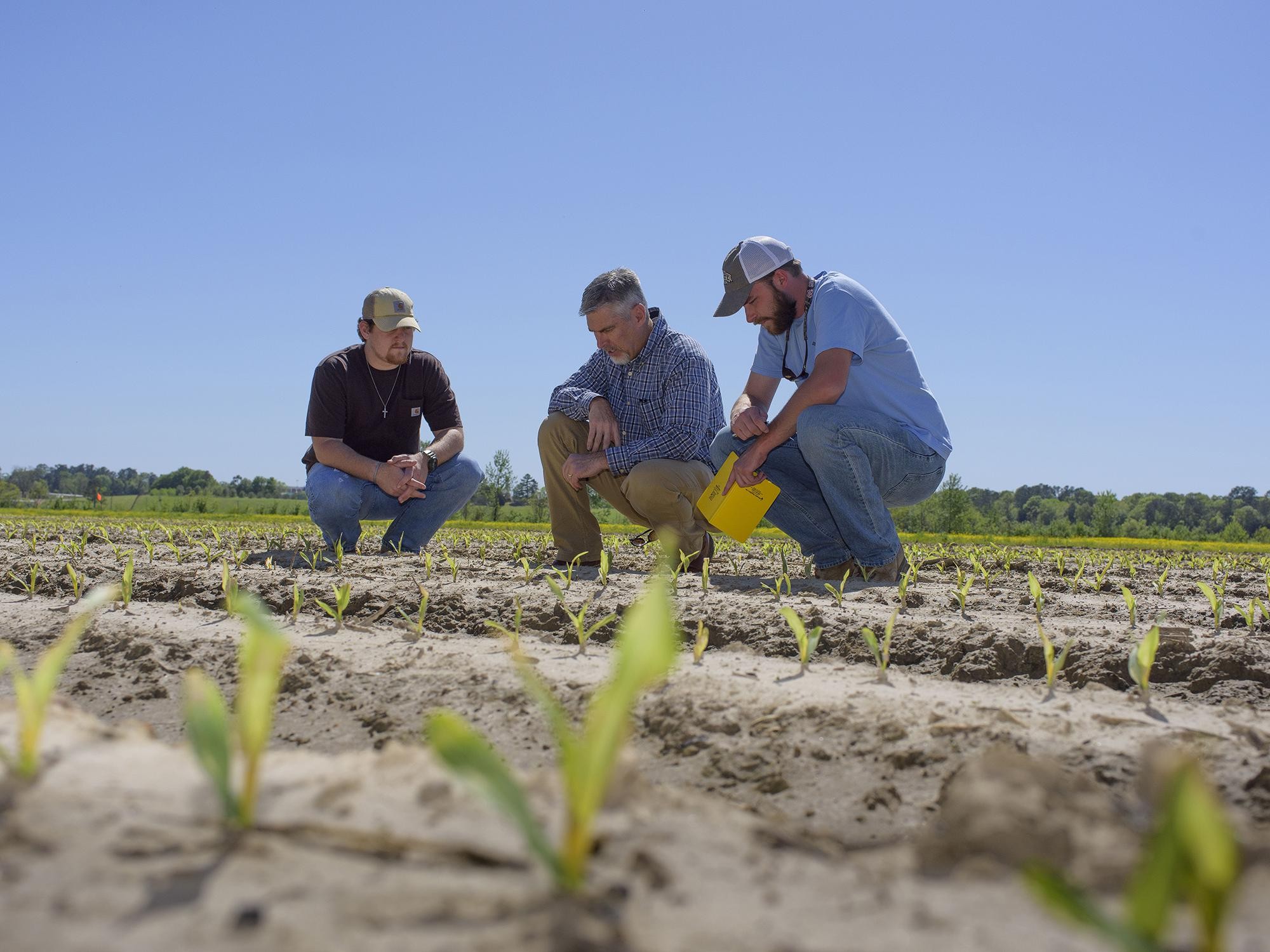 Three men crouch in a field to look at tiny corn seedlings.