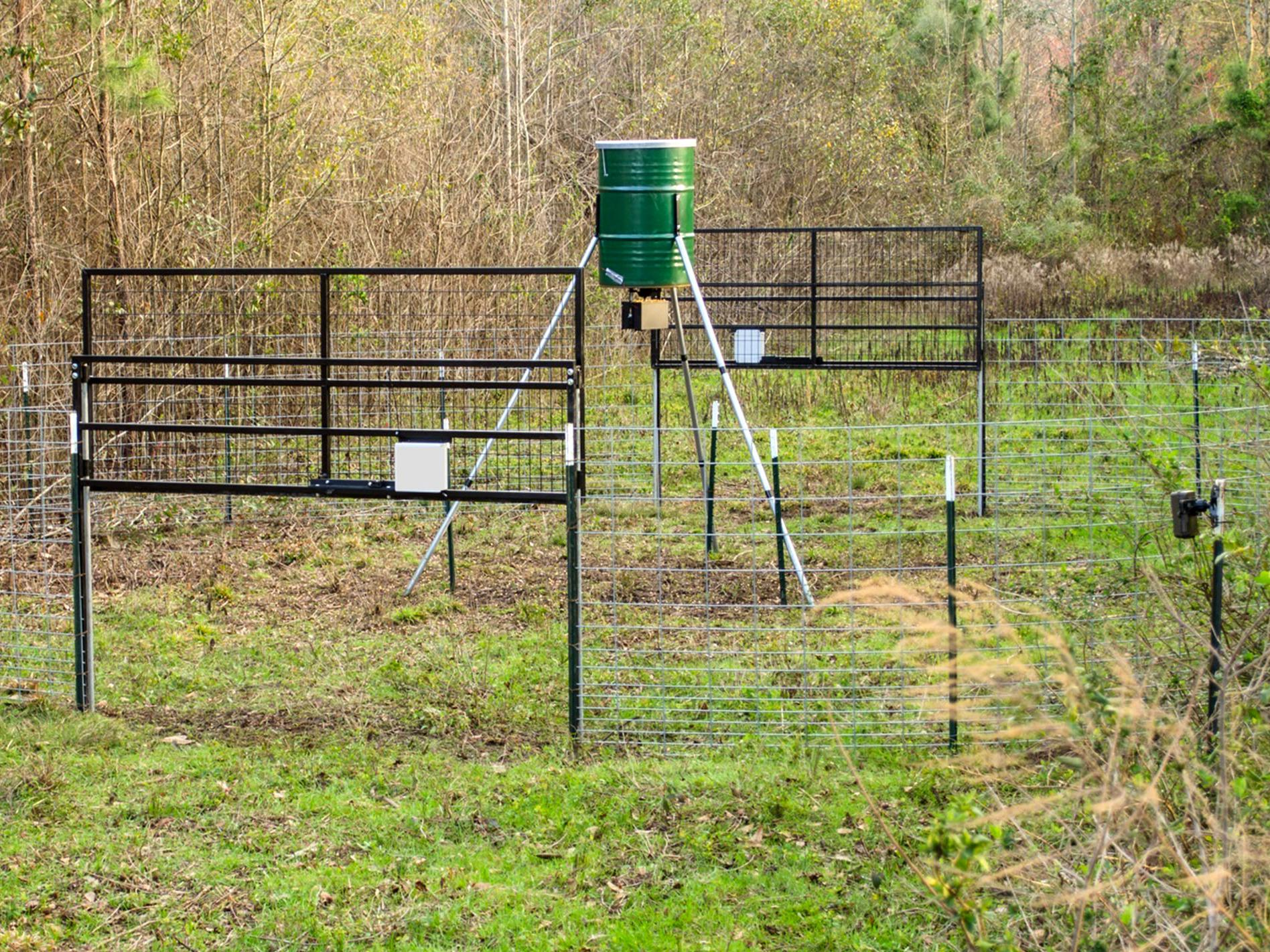 Two sturdy wire gates are raised in the large round corral trap. An automatic feeder on a tall tripod is inside the pen.