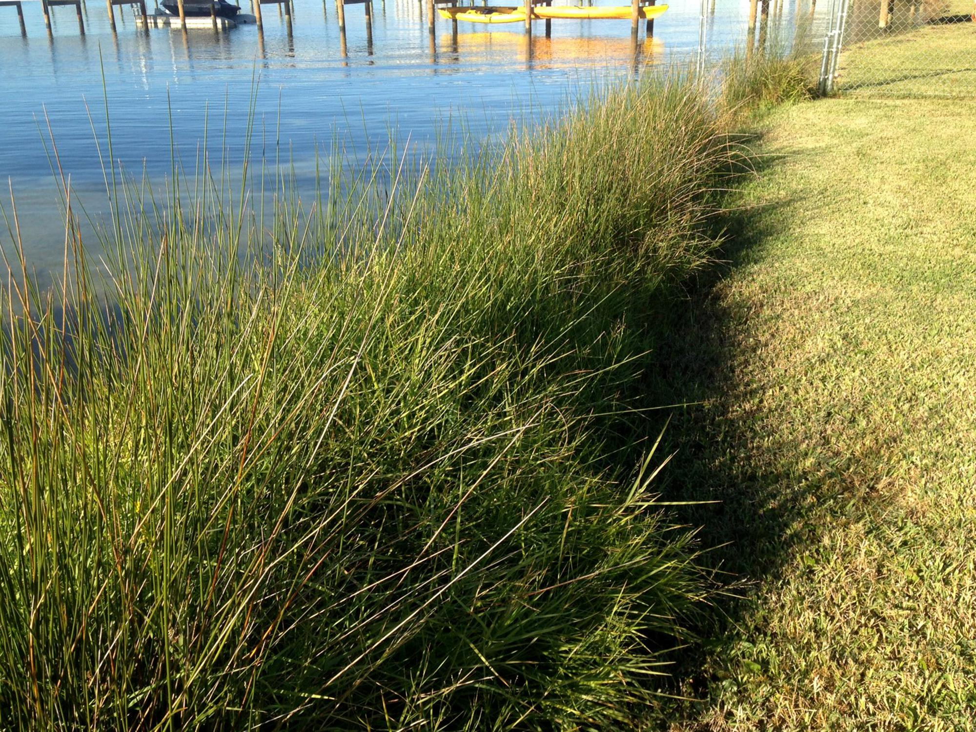 Tall grass grows between a calm body of water and low-cut grass with a wooden pier in the background.