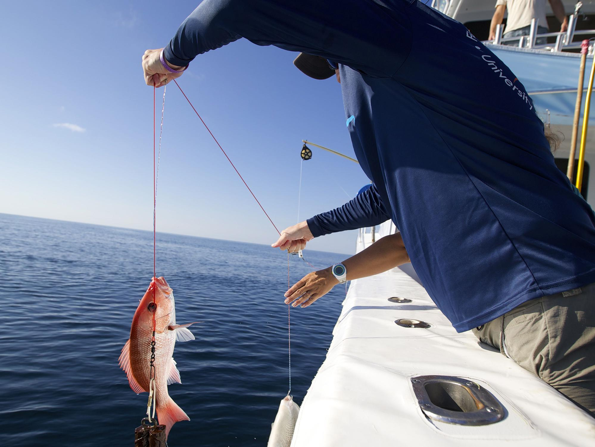 A man in a boat holds a red snapper fish with a hook-and-line mechanism.