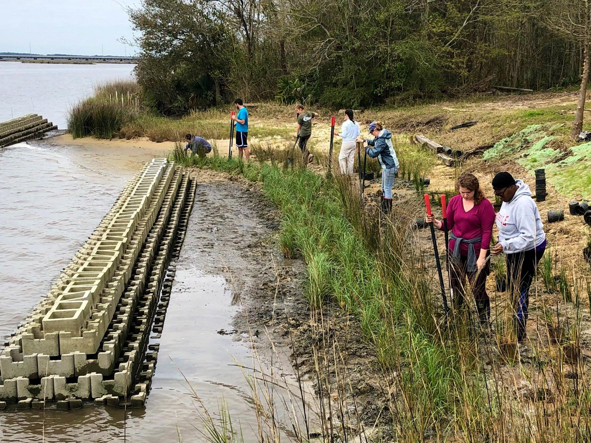 Seven people with garden shovels add grassy plants to a shoreline with large concrete bricks forming a long narrow formation in the water just off the shore.