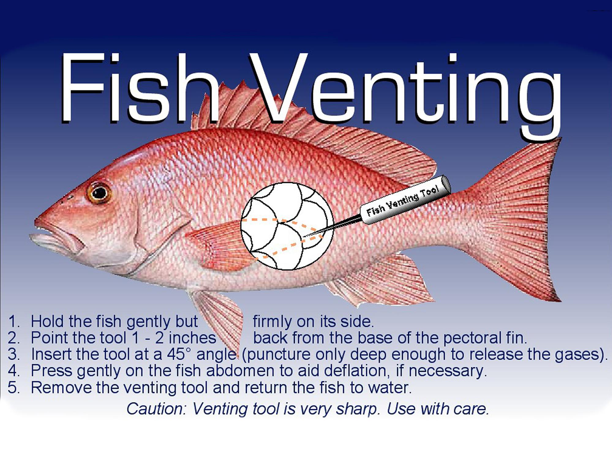 "Side view of a fish with a needle device pointed between scales in the lower midsection. ""Fish Venting Tool"" is printed on the handle of the needle."