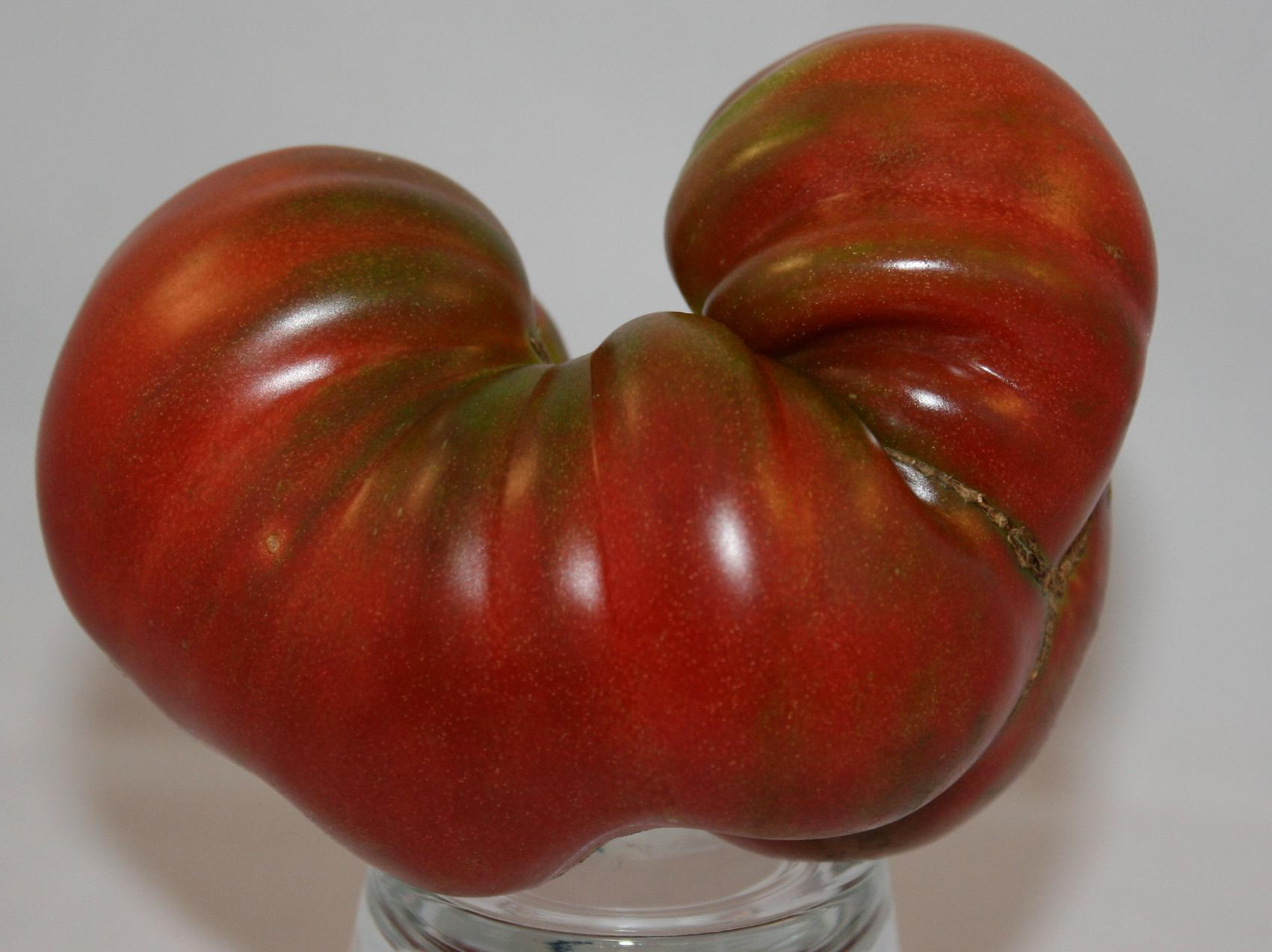 "A mostly red tomato is shaped almost like the letter ""U."""