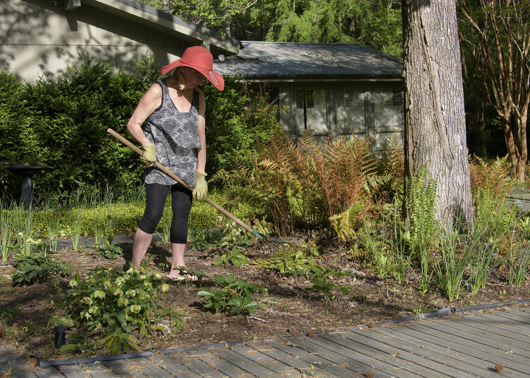 A woman uses a hoe to tend a flower bed.