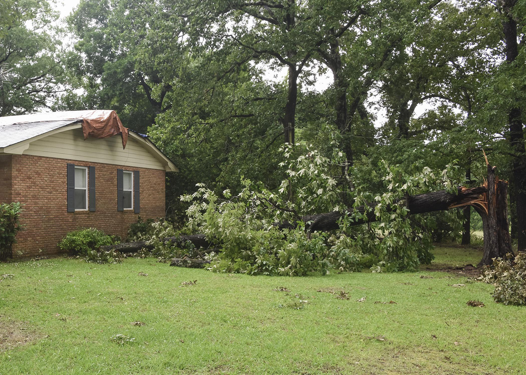 A large hardwood tree is snapped off and lays on the ground beside a house.
