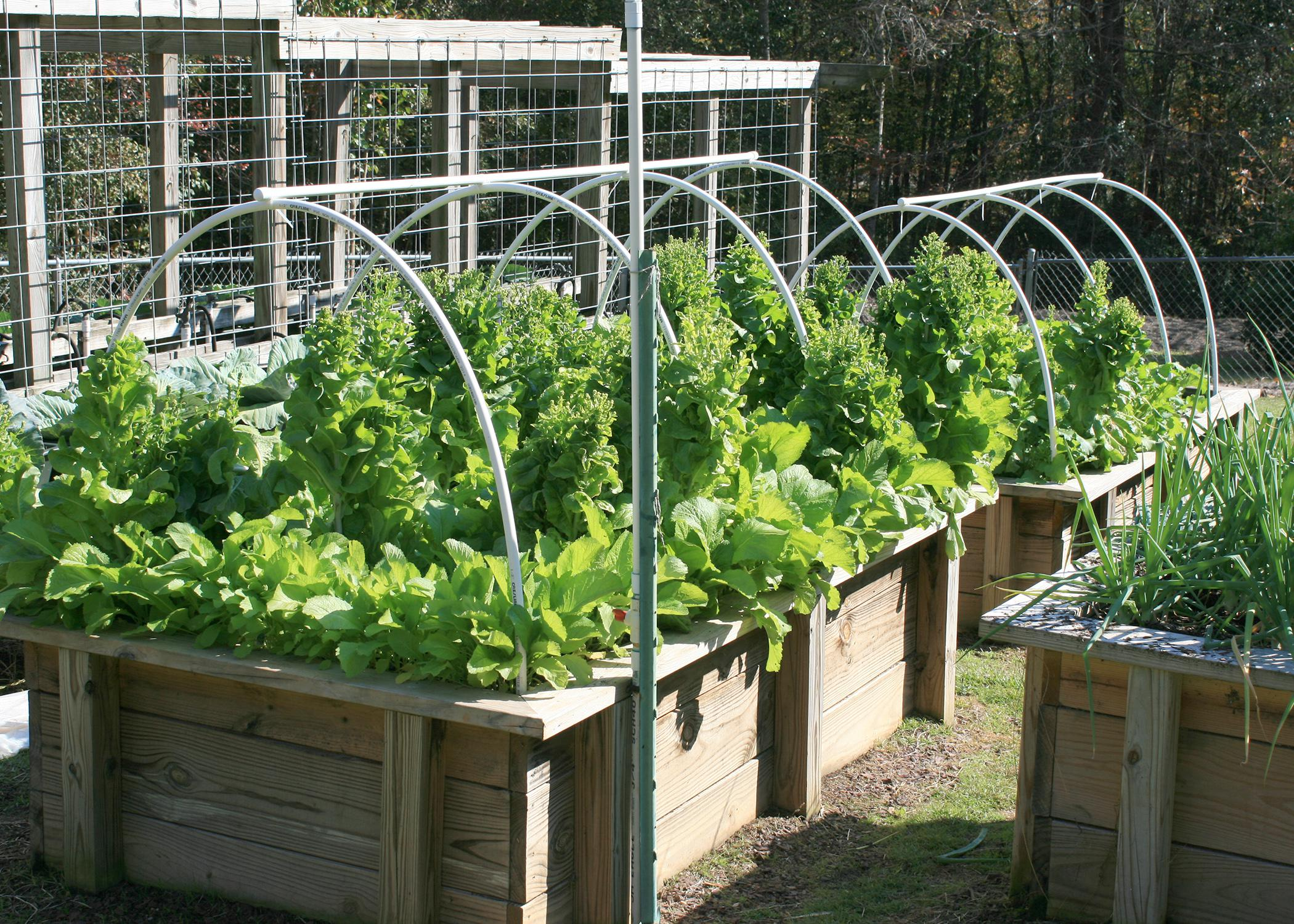 Plants grow from wooden boxes that have an overhead, curved pipe system.