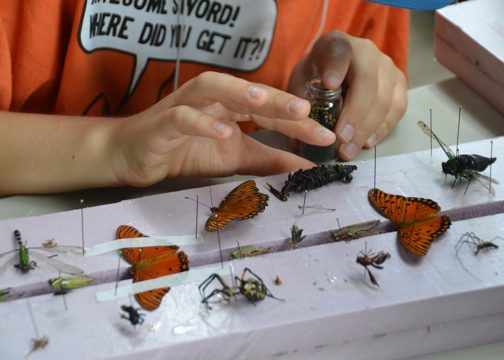 A closeup of an insect being applied to a display board.