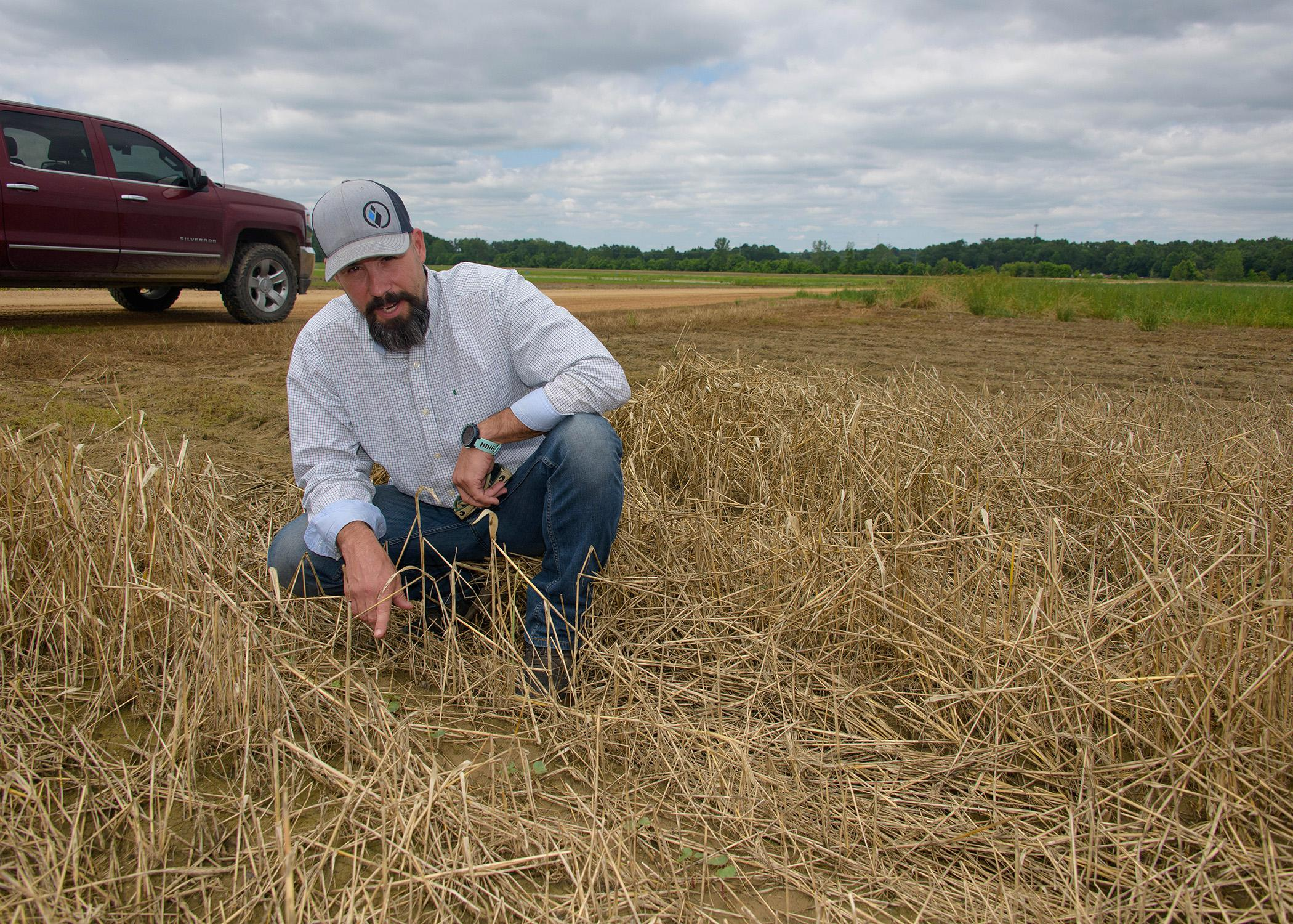 A man in a hat kneels among straw to point at tiny plants.