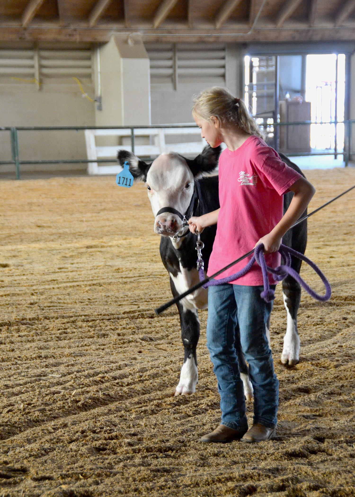Simpson County 4-H'er Madisyn Lee prepares for the beef showmanship competition at the Mississippi State Fair with a few practice rounds in the ring Oct. 4. (Photo by MSU Ag Communications/Susan Collins-Smith)