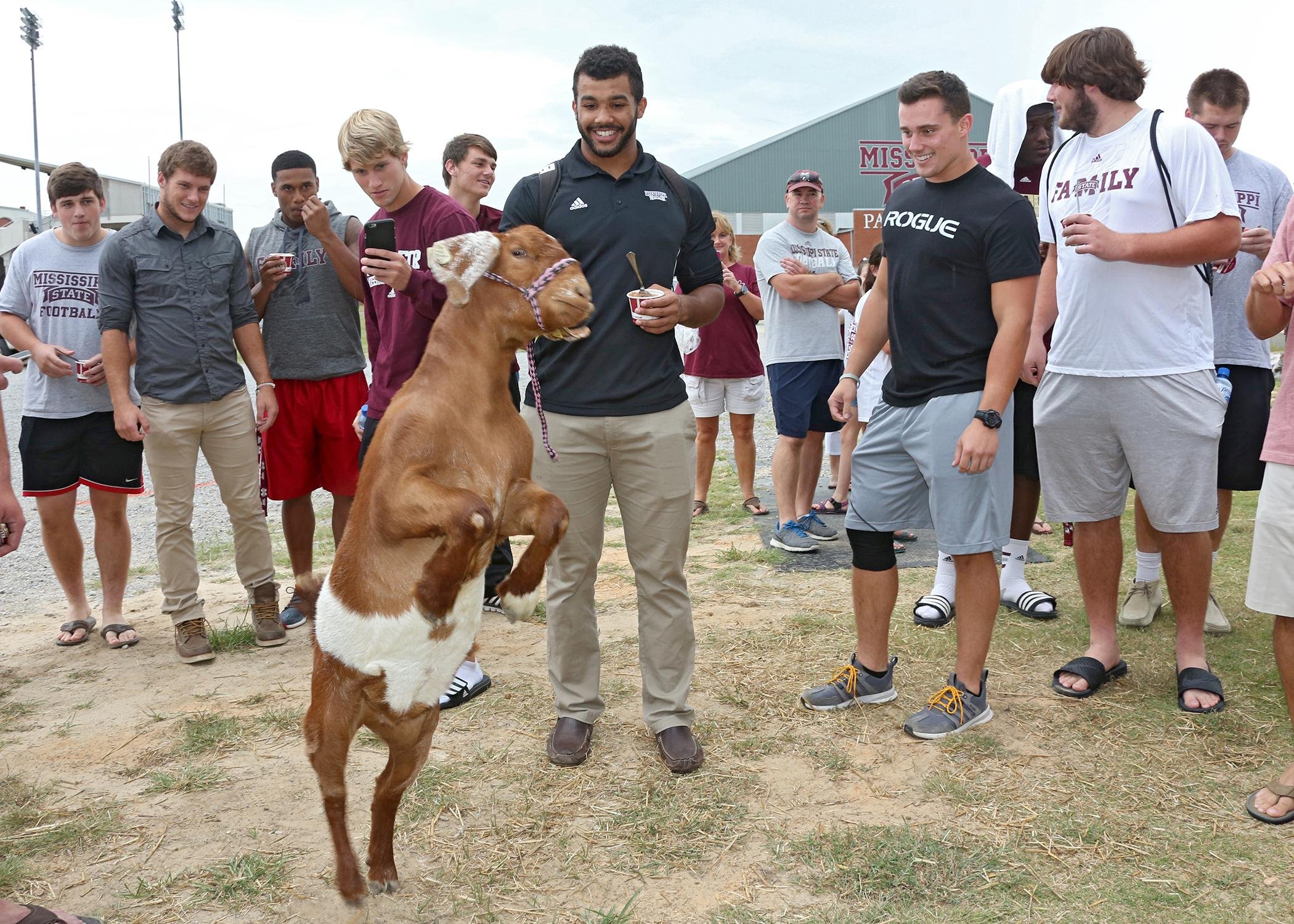 Freshman Alec Murphy of Nixa, Missouri, and other members of the Mississippi State University football team play with a goat during the fifth annual Beefing Up the Bulldogs event at MSU on Aug. 16, 2015. Event sponsors included the Mississippi Cattlemen's Association, the Mississippi Beef Council, First South Farm Credit and the MSU Department of Animal and Dairy Sciences. (Photo by MSU Ag Communications/Kat Lawrence)