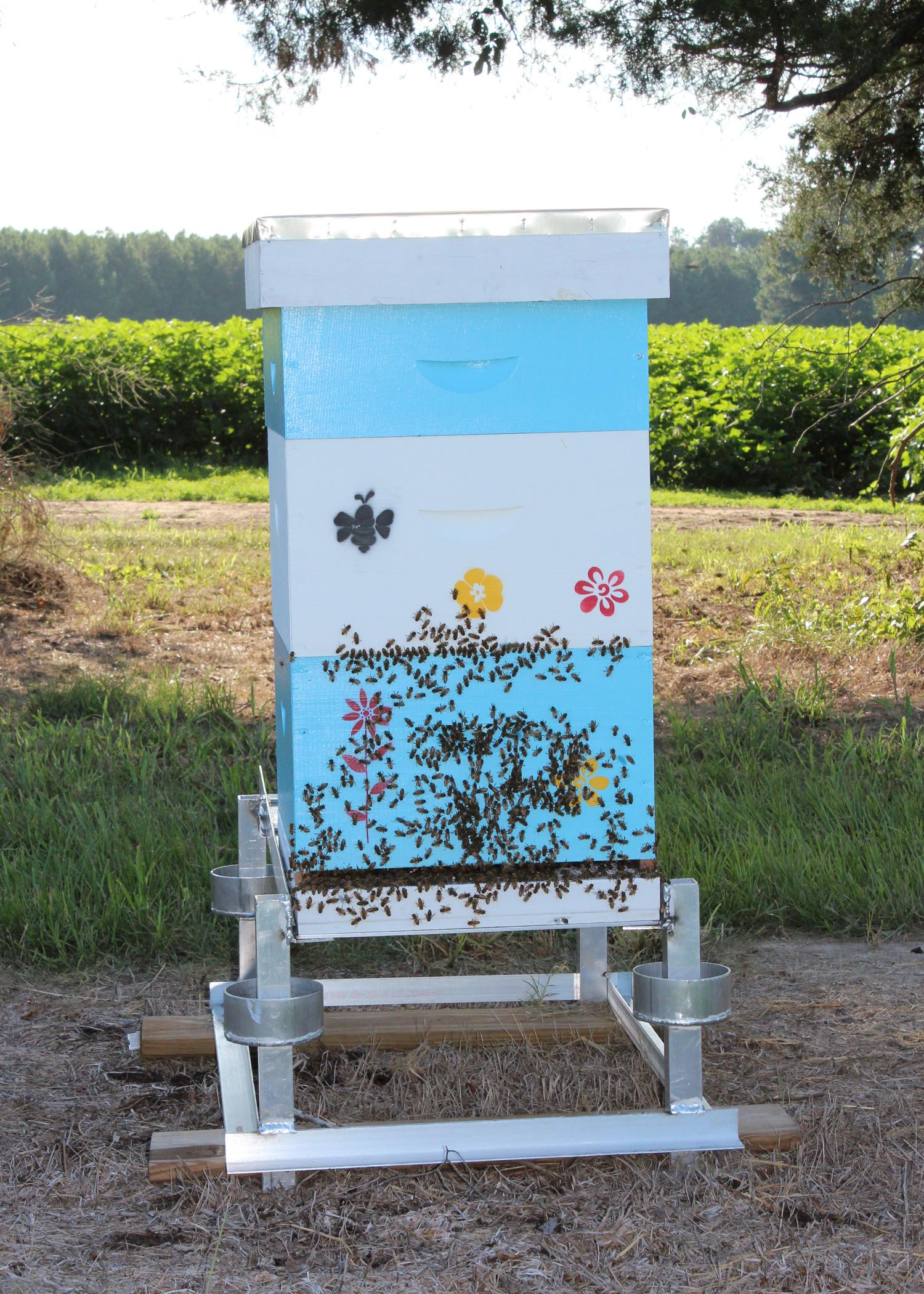 Beekeepers often choose to place bee colonies near row crops, such as this cotton field in Lowndes County, Mississippi, because the plant blooms provide much-needed nectar during the hot summer months. (File Photo by MSU Ag Communications