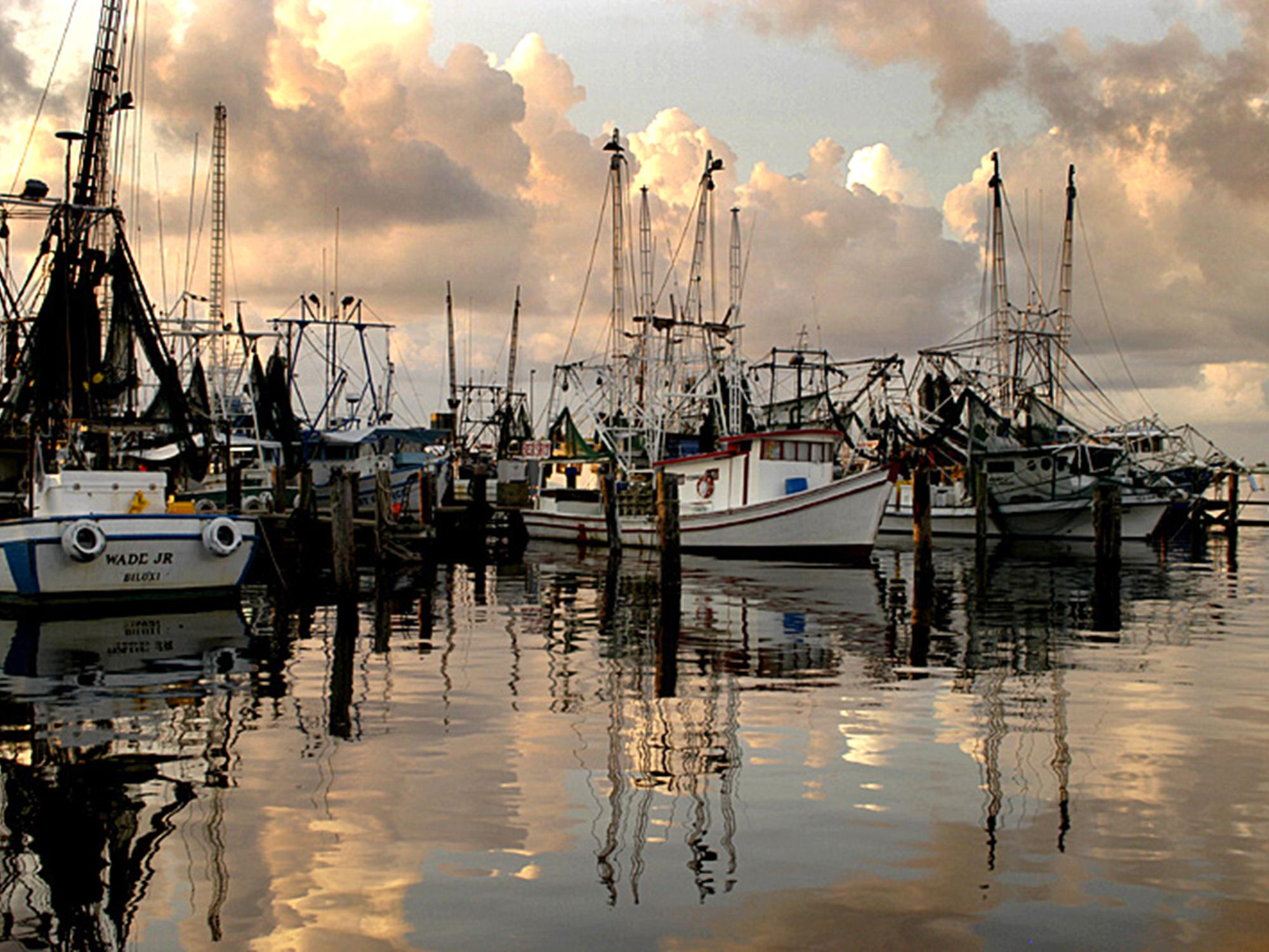 Low prices and an unusual season are making it difficult for Mississippi fishermen to harvest the state's shrimp crop. (Photo by MSU Extension/Dave Burrage)