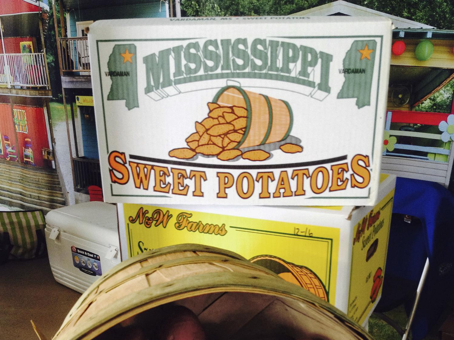 More than 100 sweet potato growers in Mississippi planted 23,200 acres of the crop this year. That is second only to North Carolina in the U.S. by acreage. (Photo by MSU Extension, Kevin Hudson)