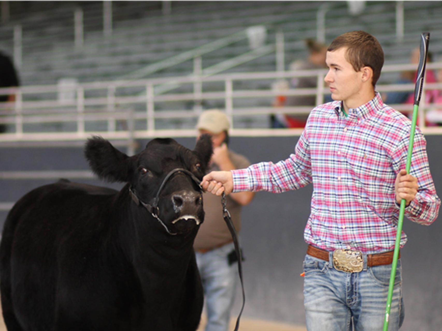 Jones County 4-H member Rustin Anderson, 17, exhibits his grand champion Brangus heifer on Oct. 22, 2016 at the State Fair in Jackson, Mississippi. (Submitted photo by Brianna Stroud)