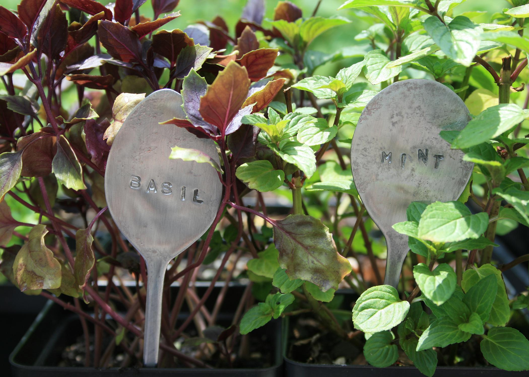 Flatten old spoons to use as plant markers, and use letter punches to stencil in the plant name. (Photo by MSU Extension Service/Gary Bachman)