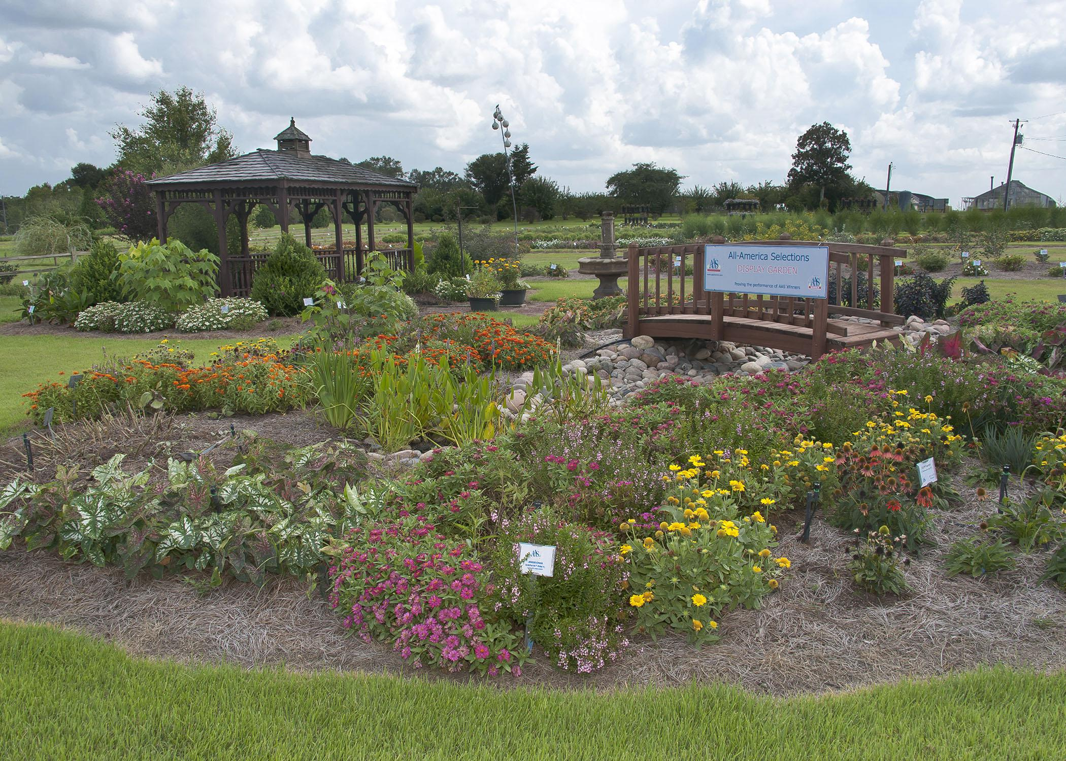The All-America Selections garden at the Mississippi State University South Mississippi Branch Experiment Station in Poplarville is in full bloom for the Ornamental Horticulture Field Day set for Oct. 2, 2014. Visitors that day can tour the demonstration gardens and hear updates on the latest research. (Photo by MSU Ag Communications/Kevin Hudson)
