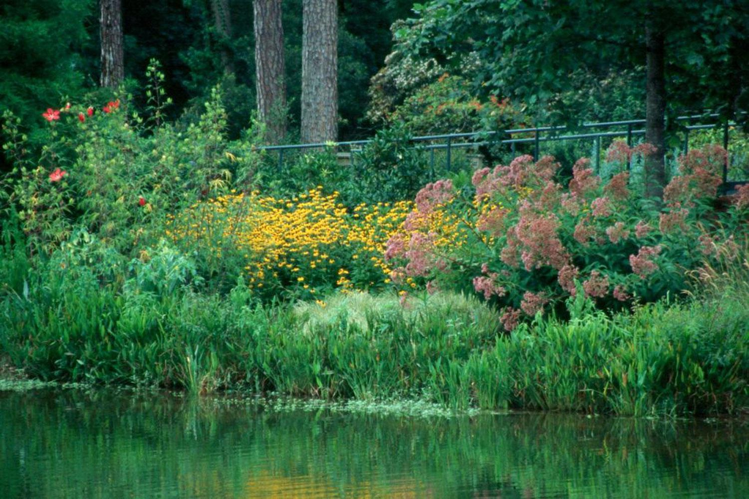 Joe Pye weed and Goldsturm rudbeckia partner well in this lakeside planting, looking impressive even from a distance.