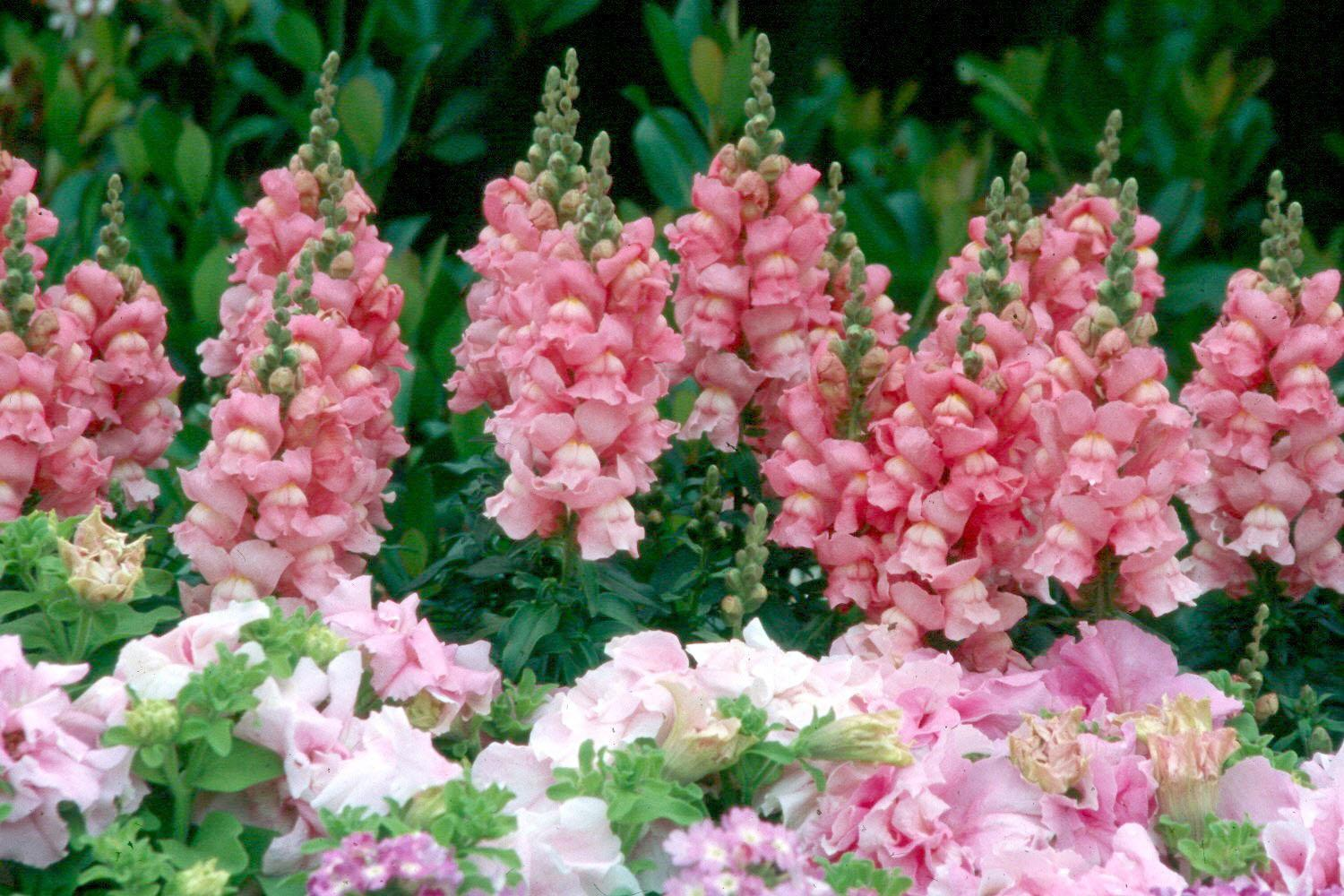 Garden centers are getting in fresh flower selections that can help add a little color to dried-out landscapes.