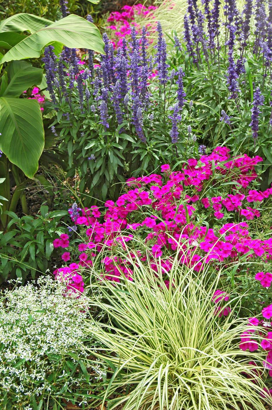This garden offers an almost endless supply of ideas for 2008 plant options. Beginning with the plants closest to the camera, enjoy the combinations of Diamond Frost euphorbia, Evergold sedge, Intensia Neon Pink phlox, Victoria Blue salvia and Red Abyssinian banana.