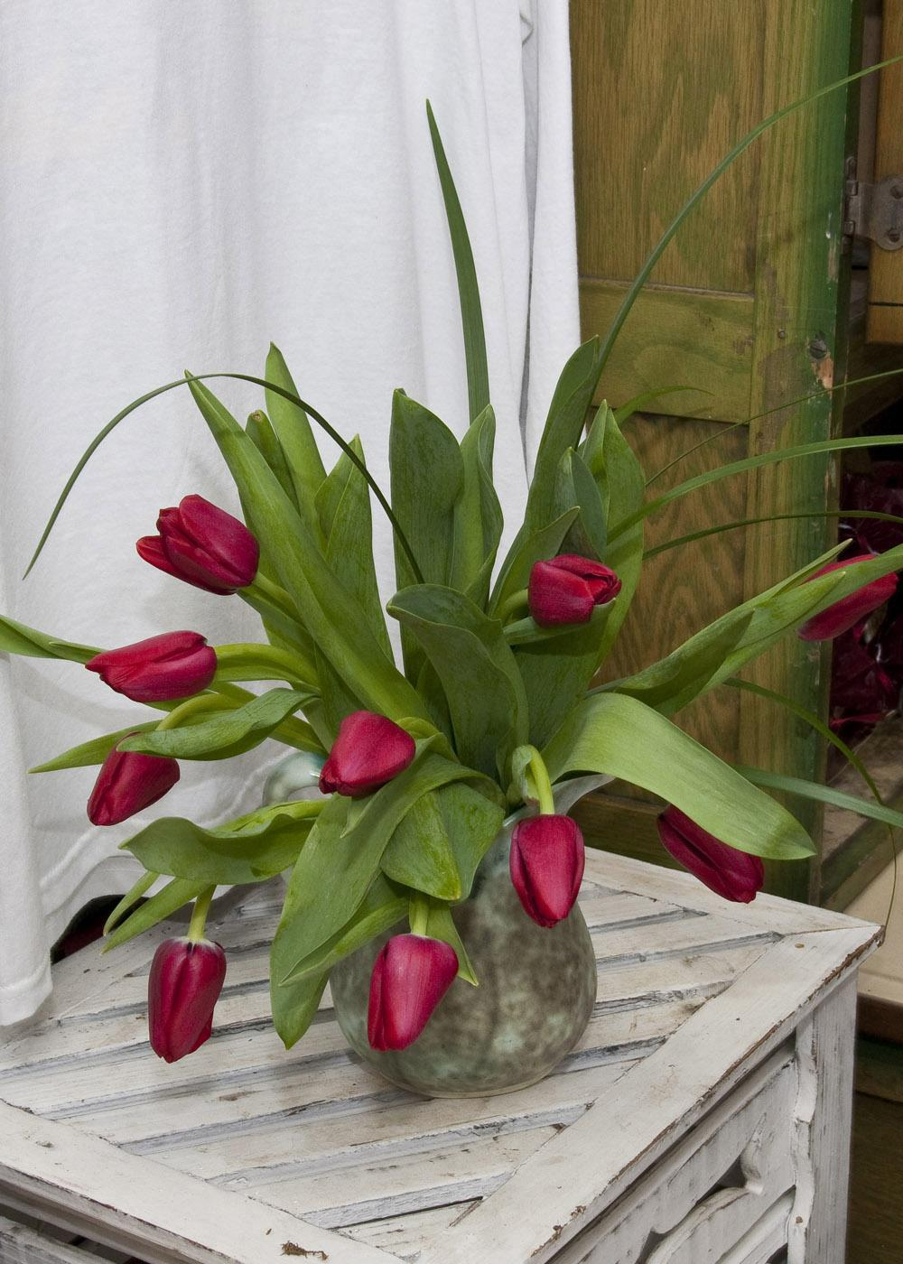"""Savvy gardeners know they can share a message from the heart this Valentine's Day with the flowers they give. Tradition says red tulips tell the recipient, """"I love you."""" (Photo by Scott Corey)"""