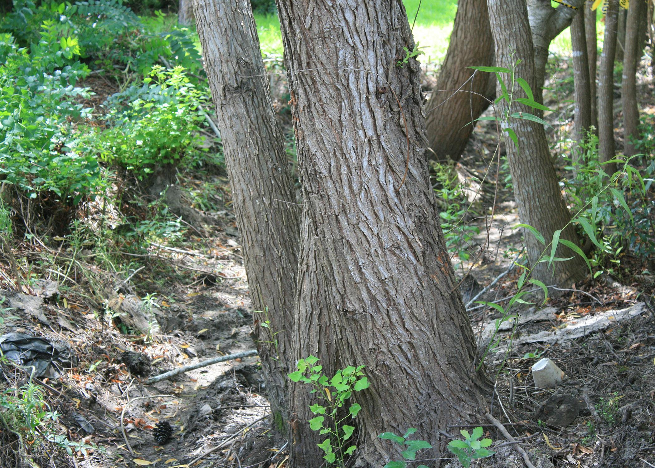 This ditch is an extreme example of a drainage easement that has been neglected, allowing small trees to become large problems. (Photo by MSU Extension Service/Gary Bachman)