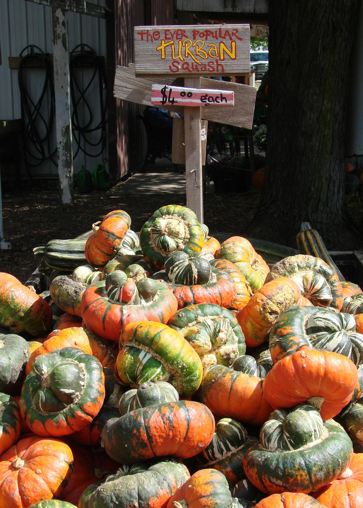 Turban squash is a popular, hat-shaped variety that Native Americans grew. The bulb-like top makes a good fall decoration with its bizarre shape and multicolored stripes. (Photo by MSU Extension Service/Gary Bachman)