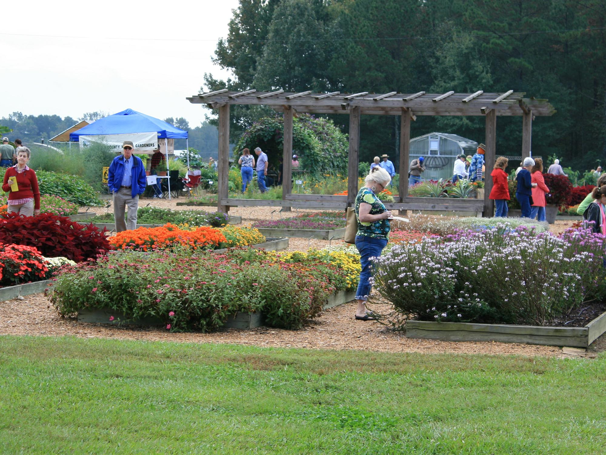 The annual Fall Flower and Garden Fest in Crystal Springs is one of the premier gardening events in the Southeast. Last year, about 5,000 people attended the two-day event. (Photo by MSU Extension Service/Gary Bachman)