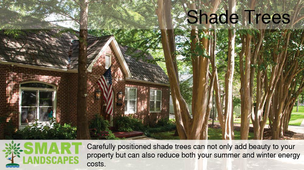 shade trees in front of property