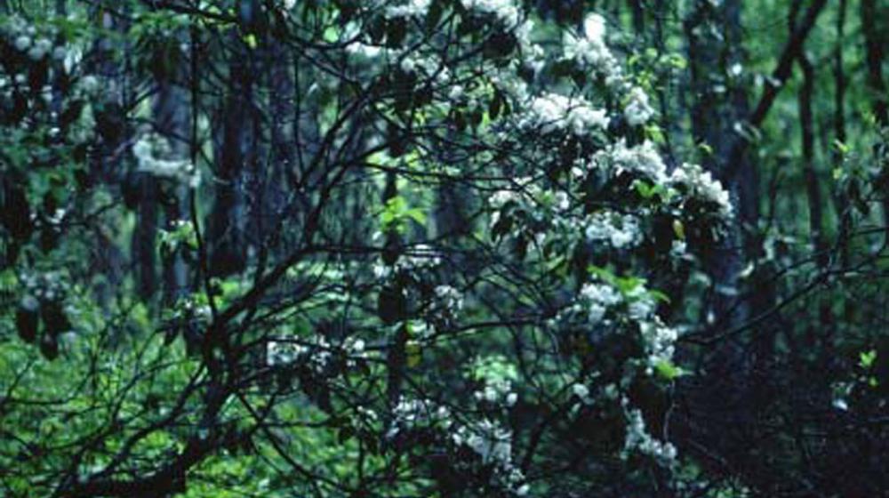 A green shrub.