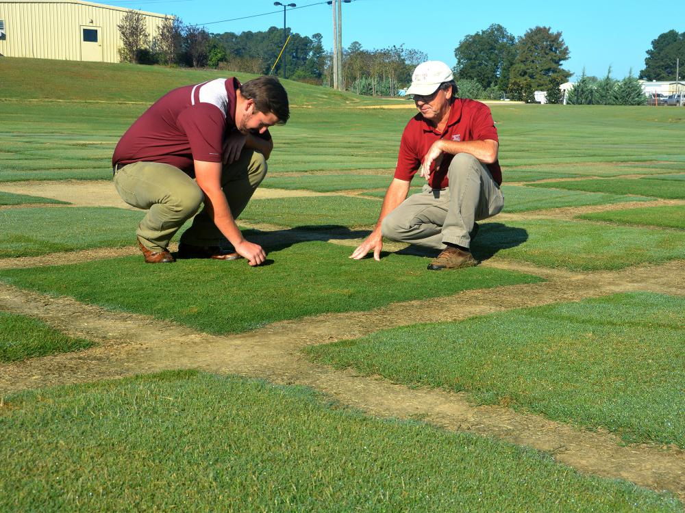 Two men kneel over a square test plot and feel the texture of the sod.