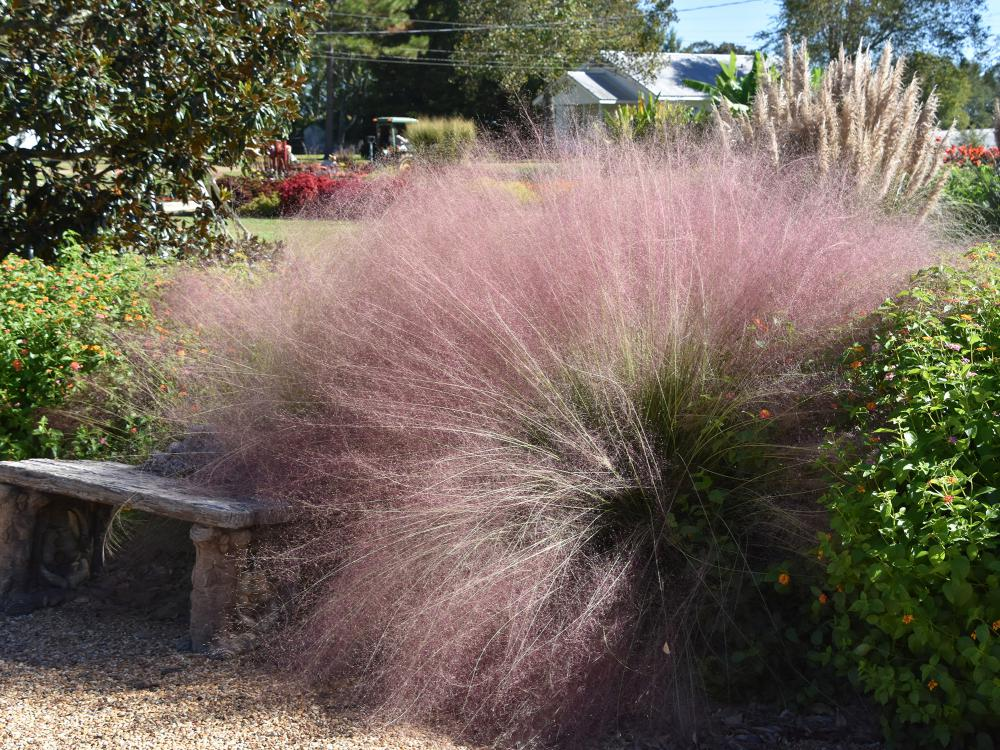 A mass of pink grasses billows beside a stone bench in a garden with greenery all around.