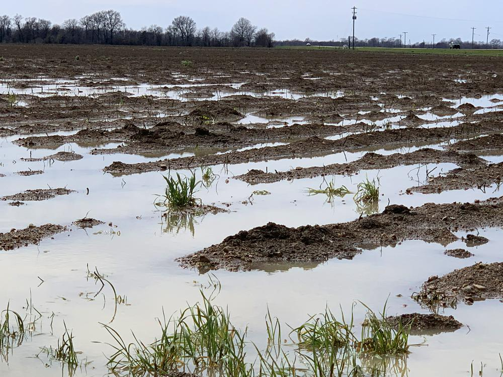 An overcast sky is reflected in water standing over and between the rows of a muddy field.